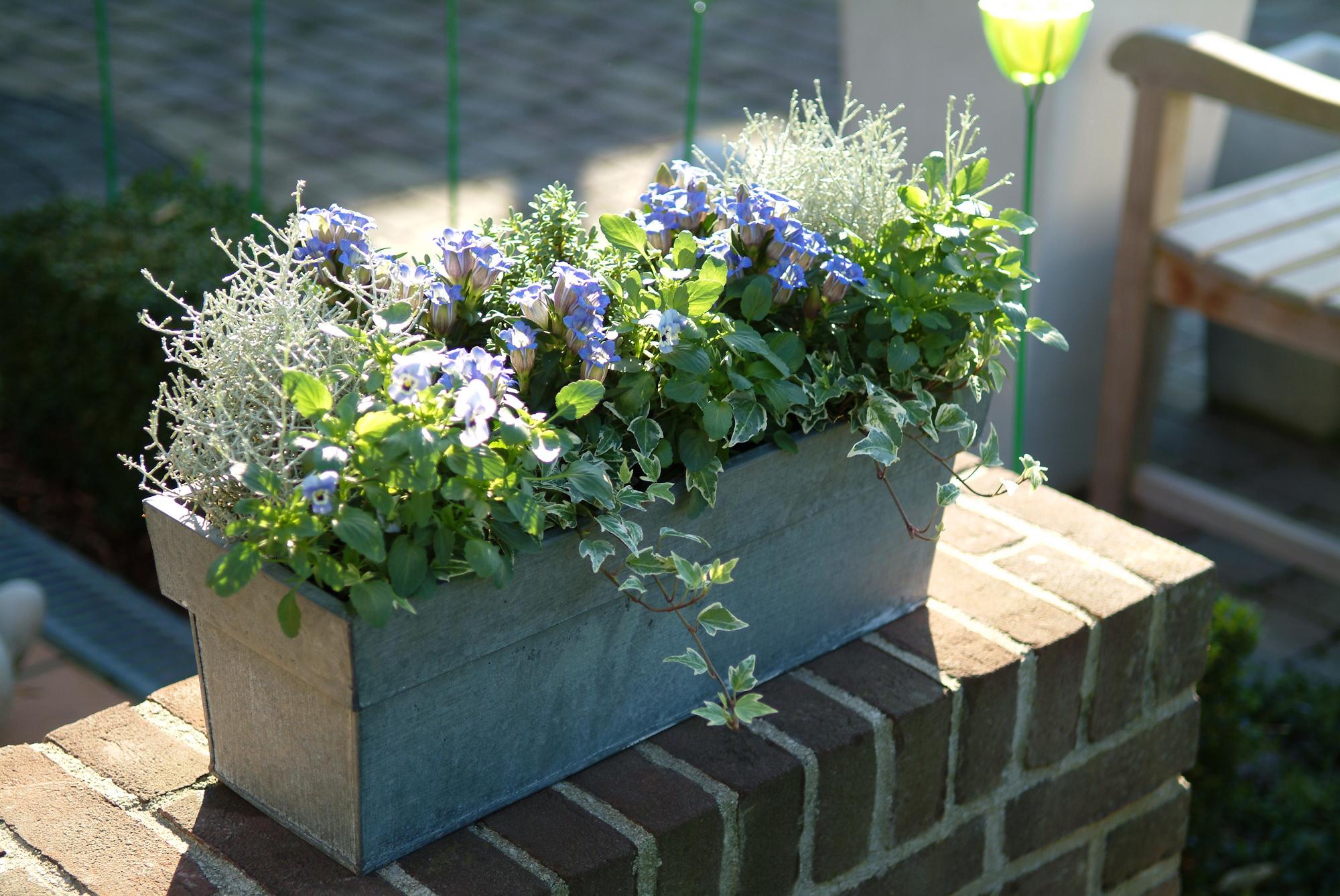 Balkonplanten Kopen Tuincentrum De Molen