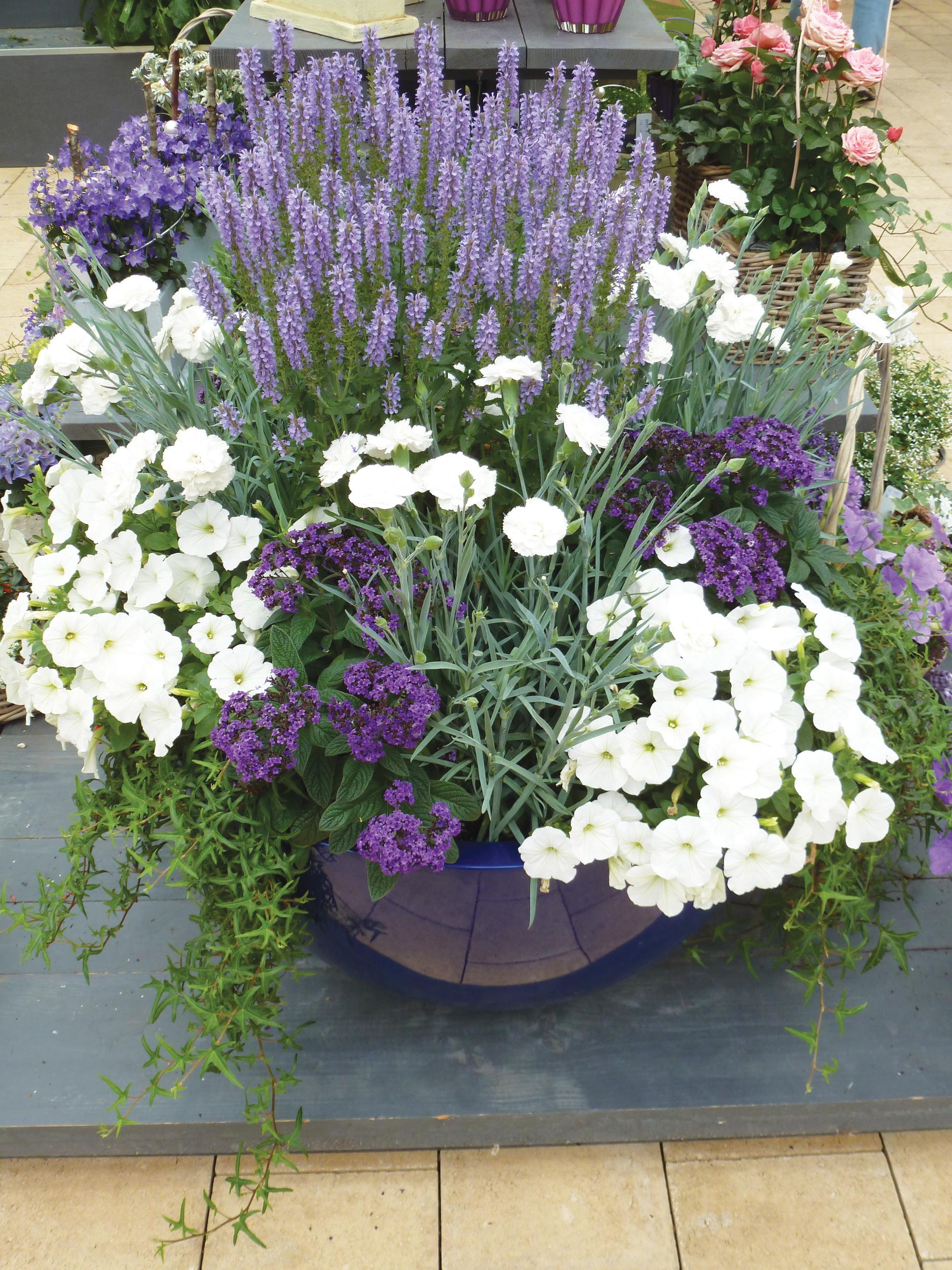 Vaste Planten Voor Plantenbakken Buiten.Pot Plant Tuincentrum De Molen