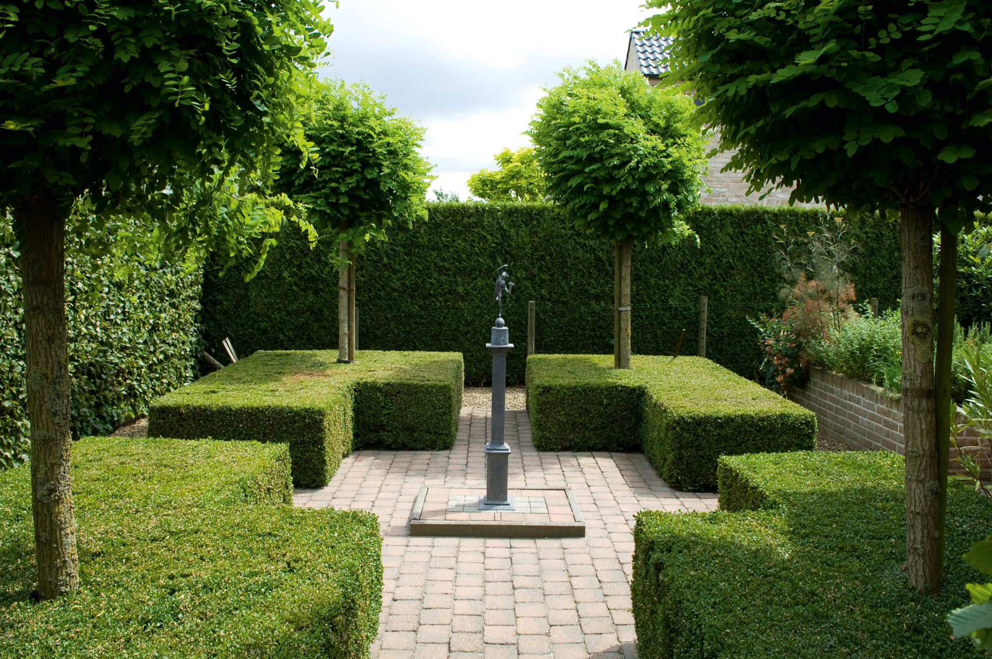haagplanten kopen haagplanten kopen hagen taxushagen haagbeukhagen beukhaag buxushagen