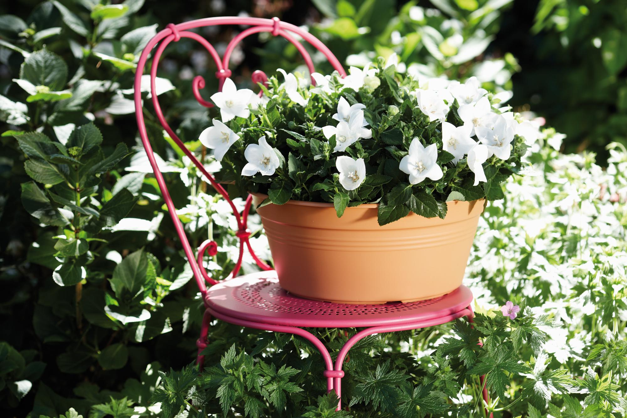 Balkonplanten kopen - Tuincentrum De Molen