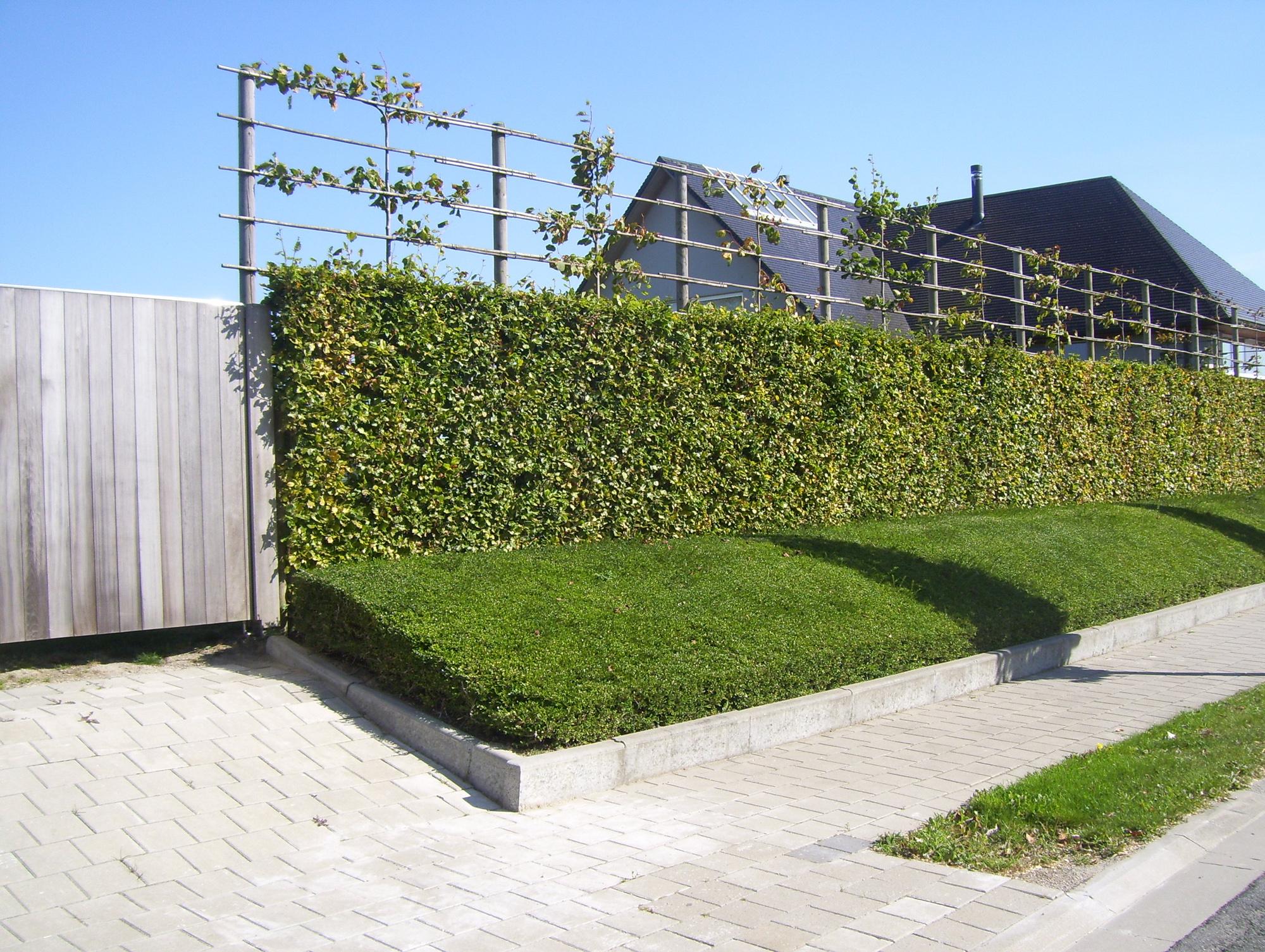 Tuin Hagen Soorten : Haagplanten kopen voor uw tuin assortiment hagen tuincentrum