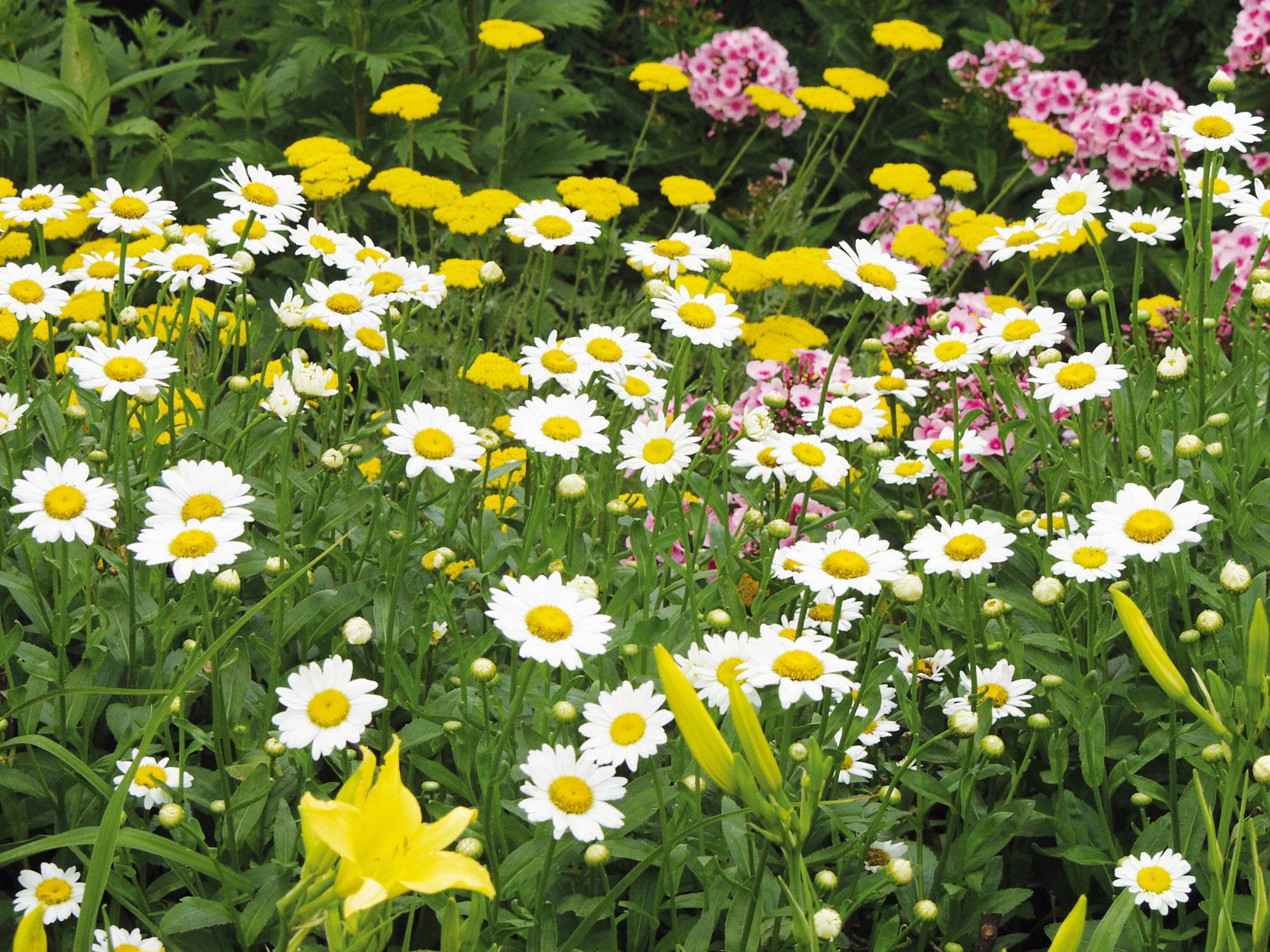 Vaste Planten Tuin : Droogte reddingsplan voor je tuin tuintips tuinhappy