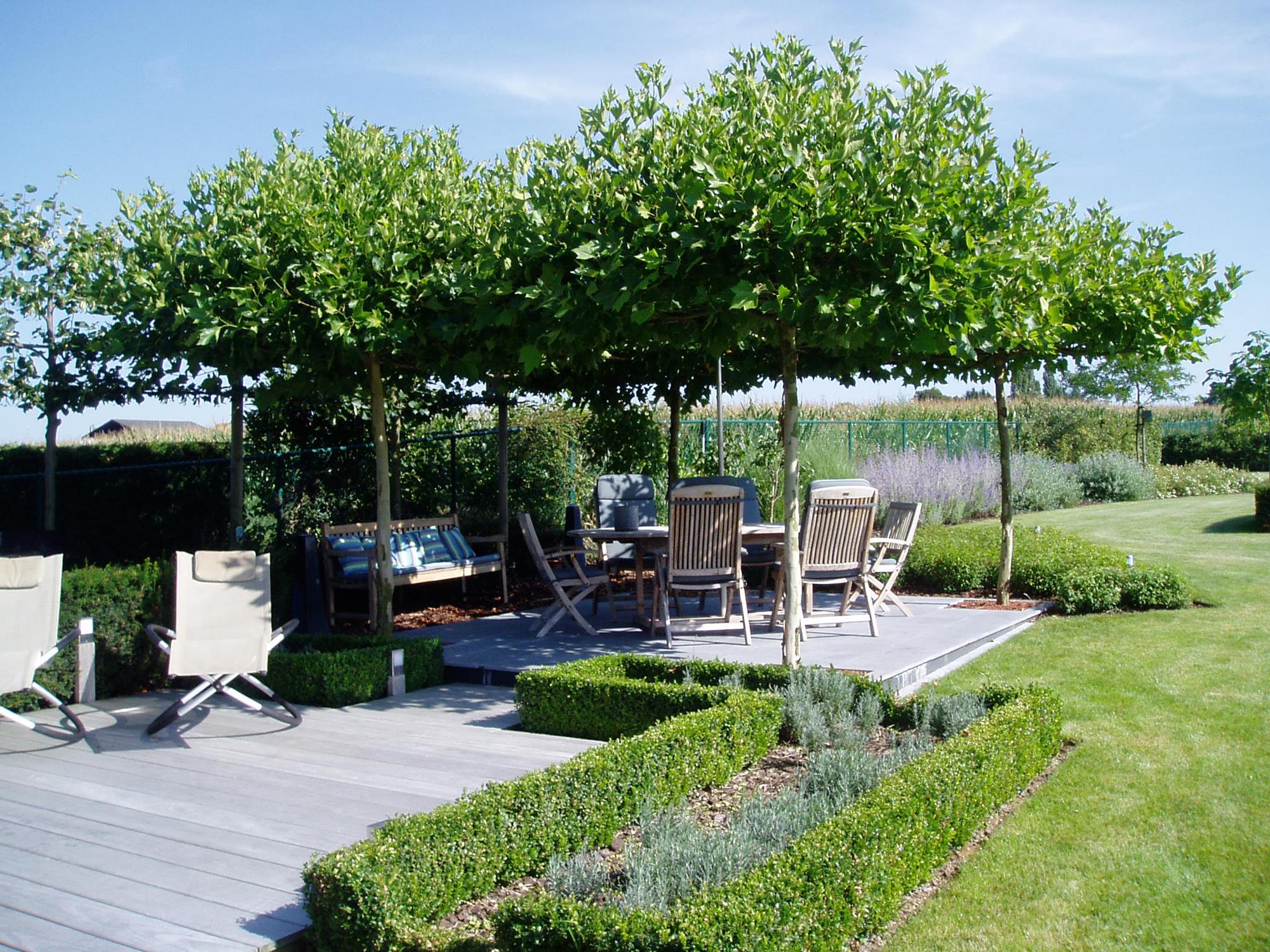 Bomen tuincentrum de molen for Schaduw een terras