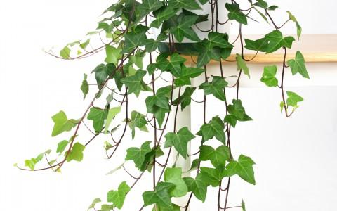 Sterke Hangplanten Voor Binnen.Hangplanten Kopen Tuincentrum De Molen